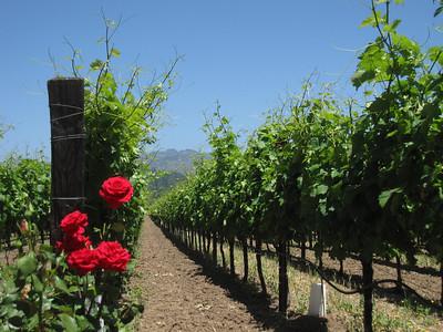 vineyards in California