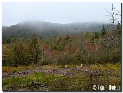 2938_J9232376-Maine : Autumn colours west of Southwest Harbor, Mount Desert Island