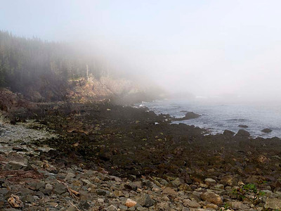 P9013608 - Quoddy Head State Park, Maine [near Lubec]