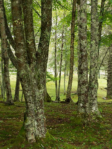 P9023624 - Roosevelt Campobello International Park, Campobello Island, NB