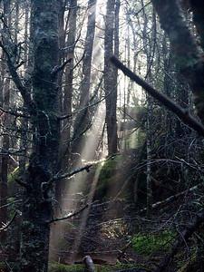 P9013605 - Quoddy Head State Park, Maine [near Lubec]