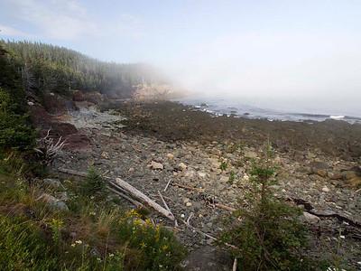 P9013607 - Quoddy Head State Park, Maine [near Lubec]