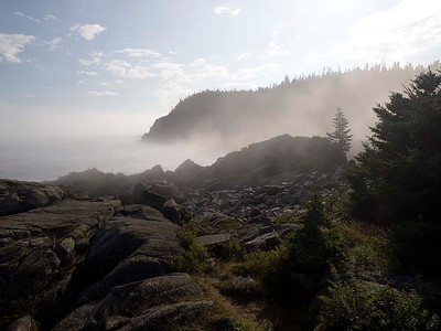P9013603 - Quoddy Head State Park, Maine [near Lubec]