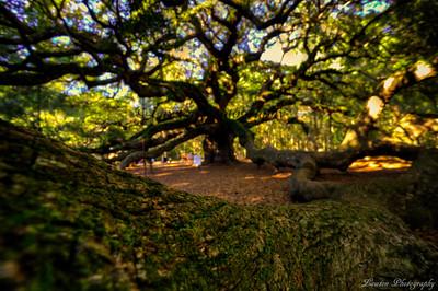 Angel Oak Branch Trail