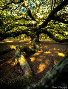 The resting branch