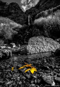 The last slivers of Autumn