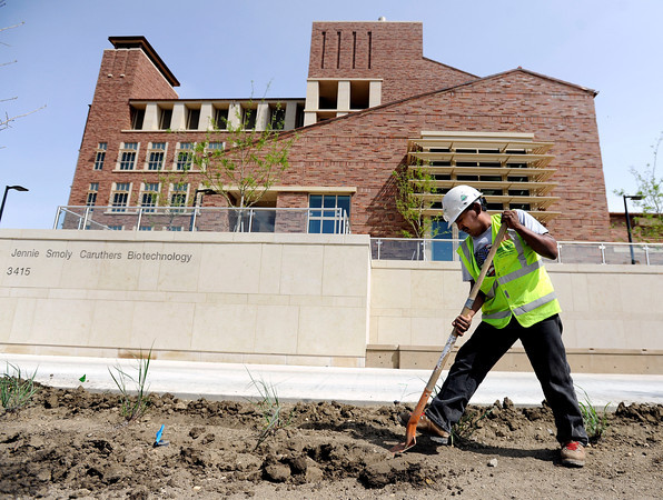 "Bernardino Dehuma works on the flower beds in front of the new Jennie Smoly Caruthers Biotechnology building on Wednesday, April 25, at  on the University of Colorado campus in Boulder. For more photos and video of the building go to  <a href=""http://www.dailycamera.com"">http://www.dailycamera.com</a><br />  Jeremy Papasso/ Camera"