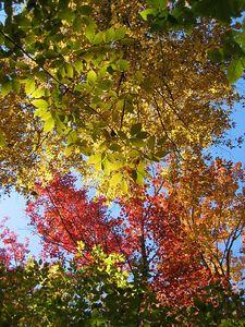 Fall canopy 3
