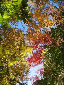 Fall canopy 4