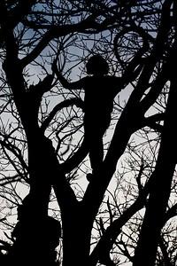 Kristin tree