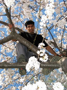 Ankur tree 2