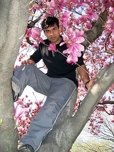 Ankur tree 3
