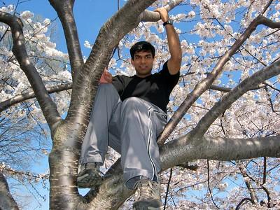 Ankur tree