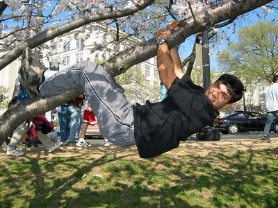Ankur tree hang