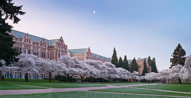 Moon over The Quad's cherry blossoms, UW