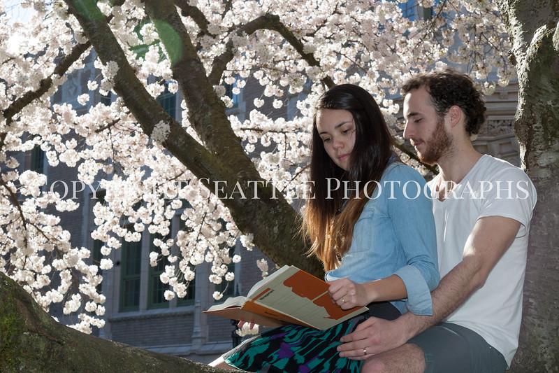 University of Washington Cherry Trees 191
