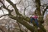 University of Washington Cherry Trees 261