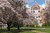 University of Washington Cherry Trees 157