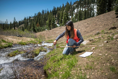 Angelica Rodriguez collects water samples along various stream tributaries in the park as she works on her Chico STEM Connections Collaborative (CSC2) summer research project, monitoring hydrothermal water temperature and composition at the Lassen Volcanic National Park on Monday, June 26, 2017 in Mill Creek, Calif. This process involves using a multimeter to analyze stream water, and collecting samples using an extendable water collection arm. (Jason Halley/University Photographer)