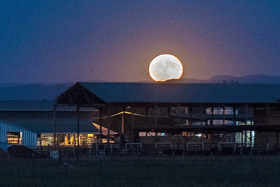 Signifying fall is around the corner, the harvest moon rose bright above the University Farm on Thursday, October 5, 2017 in Chico, Calif. (Jason Halley/University Photographer)