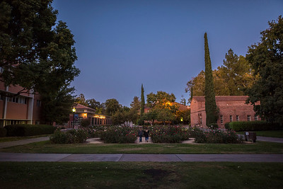Night falls on the George Petersen Rose Garden in Glenn lawn on Friday, October 13, 2017 in Chico, Calif. (Jason Halley/University Photographer)