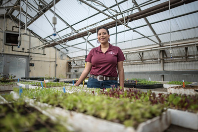 Kaeli McCarther, is photographed at the greenhouses at the University Farm on Tuesday, April 25, 2017 in Chico, Calif. Kaeli is a senior completing a bachelor's degree in agriculture, with an option in agricultural science and education. She is the founding president of the United Students of Agriculture Club, a chapter of the National Minorities in Agriculture, Natural Resources, and Related Sciences (MANRRS) organization (Jason Halley/University Photographer)