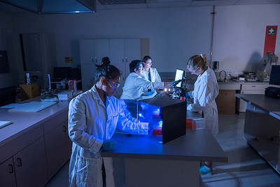 Chelby Polines, 22, Rigoberto Vazquez, 22, Dr. Ozgul Yasar, and Victoria Matthews, 21, (clockwise from left to right) work on a chemical compound as part of a research project on the mechanical and surface properties of scaffolds for the Chico STEM Connections Collaborative (CSC2) Engineering UGR Summer Program Research project on Tuesday, September 19, 2017 in Chico, Calif. (Jason Halley/University Photographer)