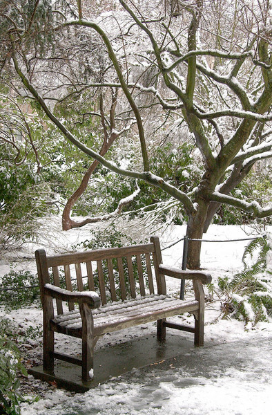 Snowstorm in Grieg Grove