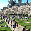 Springtime in the Quad
