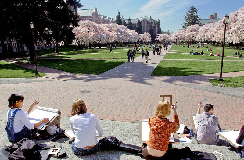 Art students sketching cherry blossoms in the Quad