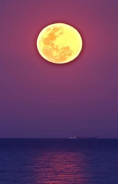 Mond No.  42-40283916