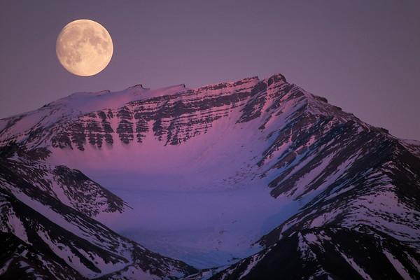 Mond No.  42-21866933