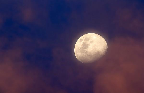 Mond No.  42-40283504