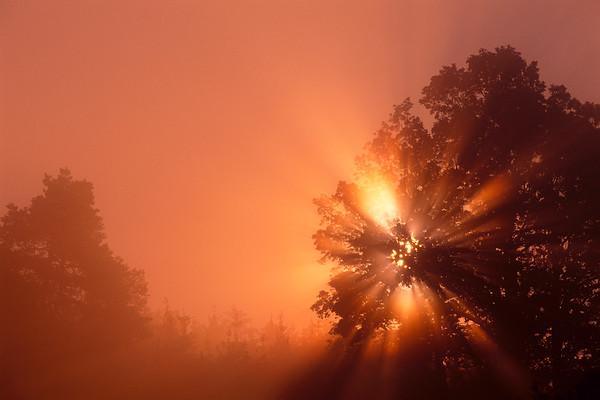 Sonne No. 600-846522
