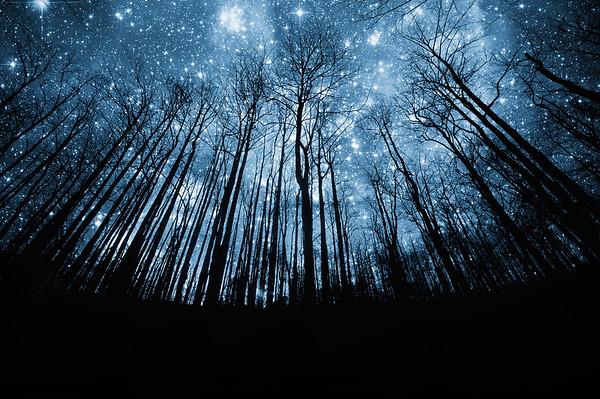 Stars No.  42-15688576