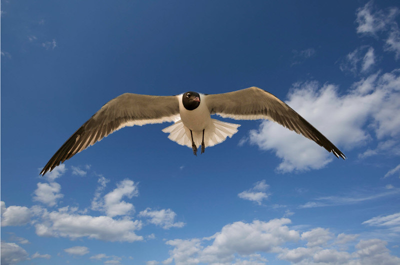 Seagull floats above the beach on Long Beach Island (Summer, 2013)<br /> <br /> Copyright: Studio 63