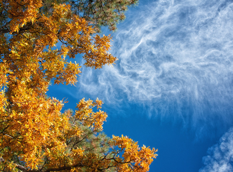 Fall and Northern Arizona