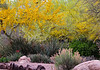 Arizona Desert Botanical Garden