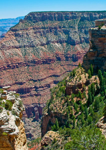 Diversity of the Grand Canyon