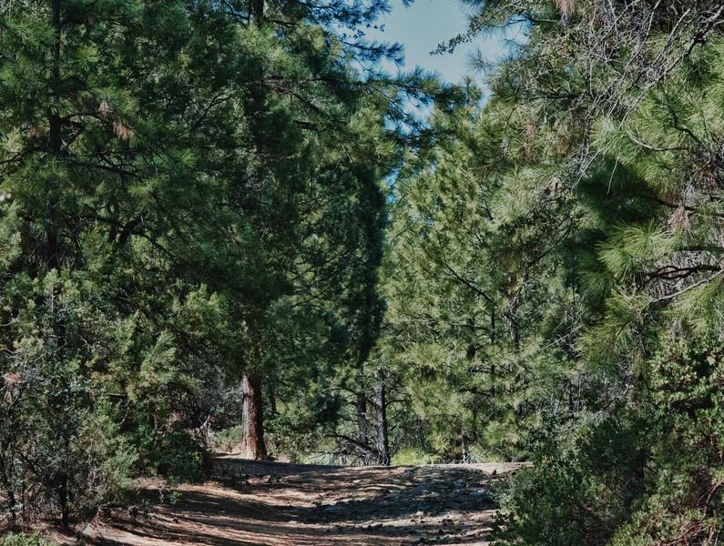 Prescott Forest