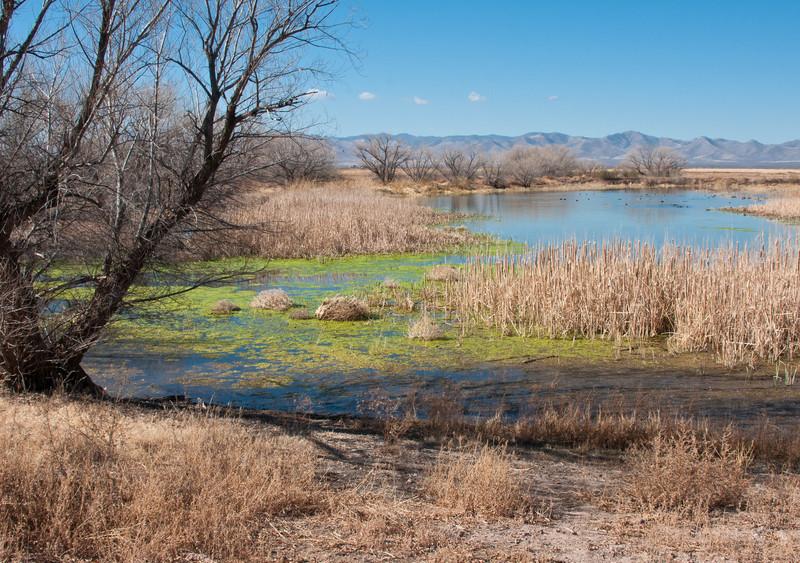 Pond at White Water Draw--Riparian Preserve, Southern Arizona