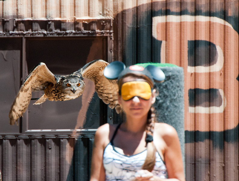 """Better watch out Mousey...you have company! """"Luna"""" the Eurasian Eagle Owl and an """"unsuspecting"""" volunteer!"""