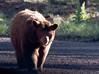 Dan-Bear