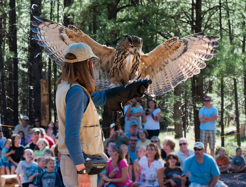 High Country Raptors Inc. and the Eurasian Eagle Owl are a featured Raptor freeflight show!