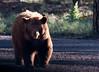 "Dan-Bear...like Eeyore, ""Thanks for noticin' me!"""