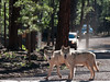Wolves--Official Bearizona Park Brochures 2012-2014