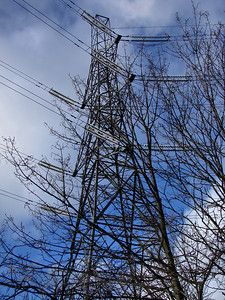 Electricity Pylon and Trees Reaching Up
