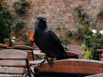 Bird TBI