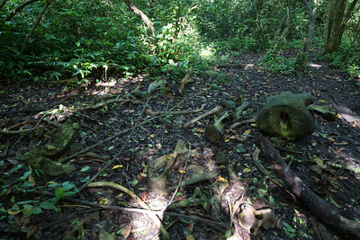 Elephant Bones in the Forest