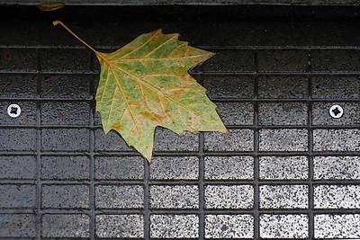 Golden Jubilee Bridge - Clara's Leaf?